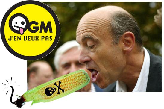 Juppé et les OGM