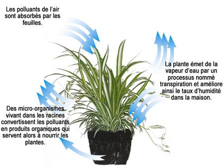 plante depolluante processus
